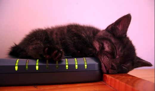 sleepy_firewall_cat.png